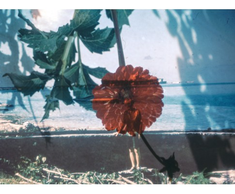 Red Peddels